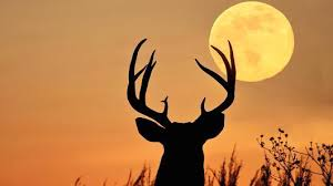 The Buck Moon