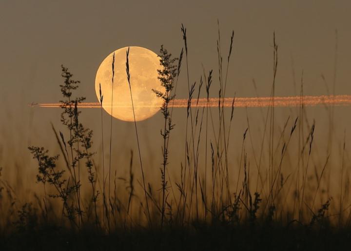 harvest-moon-plane2