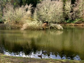 The local duckpond